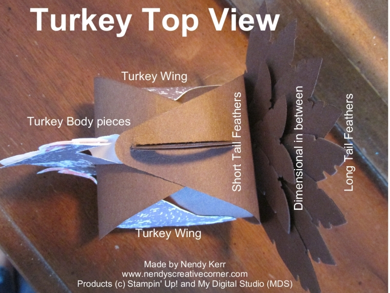 Curvy Box Turkey - Top View