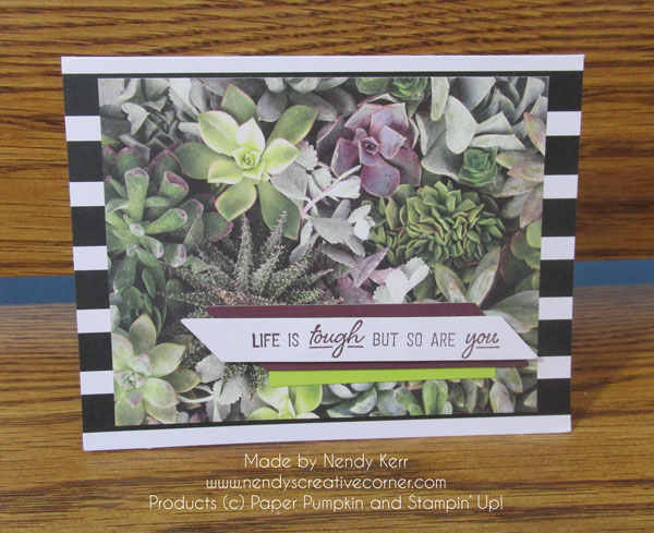 February Paper Pumpkin Succulents Photo Card