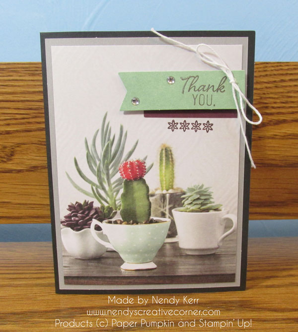 February Paper Pumpkin Succulents in Cups card